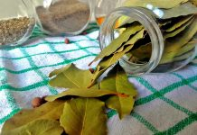 BURN-A-BAY-LEAF-IN-YOUR-HOUSE.-THE-REASON-YOU'LL-BE-AMAZED
