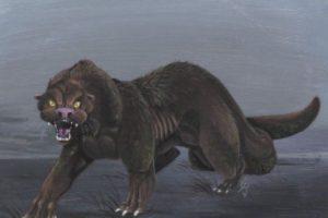 Amarok Wolf