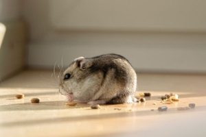 5 Guaranteed Ways to Keep Your House Safe from Pests